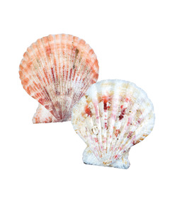 Scalloped Seashells